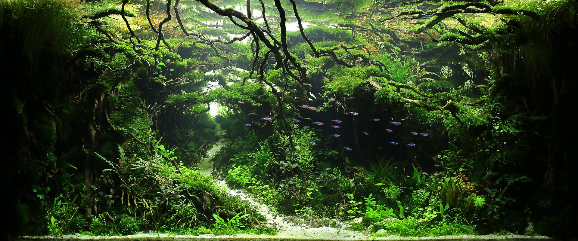 Gallery Reeflowers Aquascaping Contest